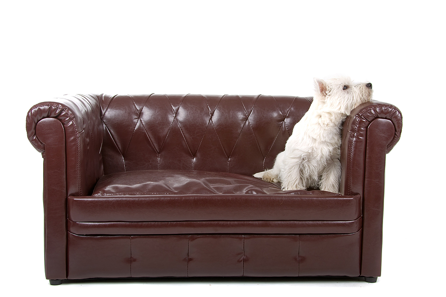 Leather Cleaning Preston | Leather Cleaners Preston | Image of Clean Leather Sofa